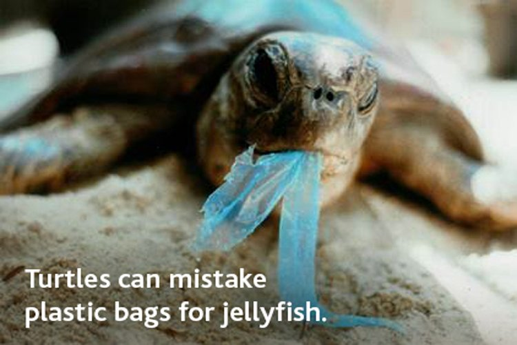 #AwarenessWednesday: Sea turtles mistake plastic bags for food. On #WorldOceansDay keep your waterways #DebrisFree. https://t.co/oDDDrx7Usz