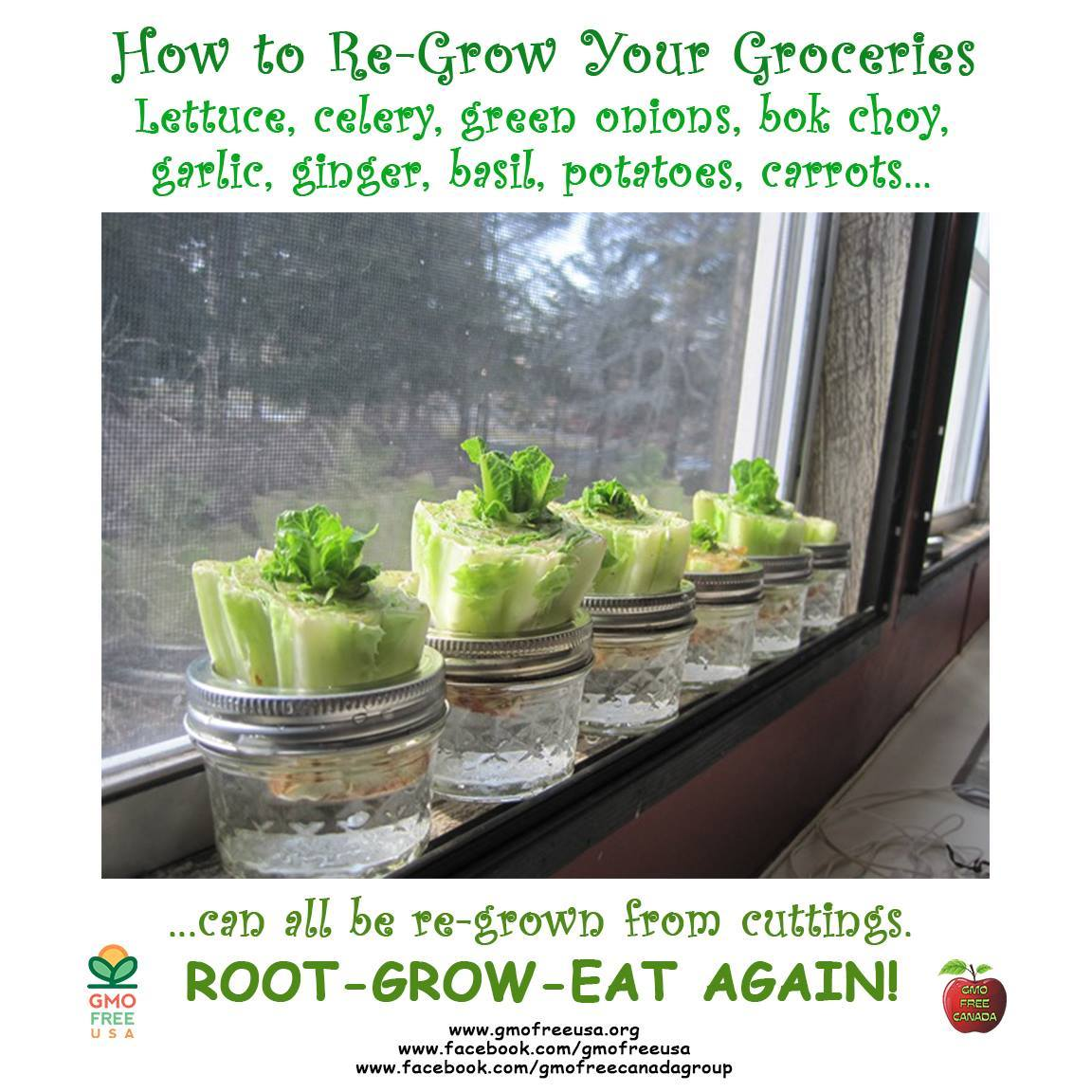 RT @GMOFreeUSA: Here's an idea to stretch your grocery money and grow your own, organically.... https://t.co/rXUSSa4IhY https://t.co/PFYBGO…