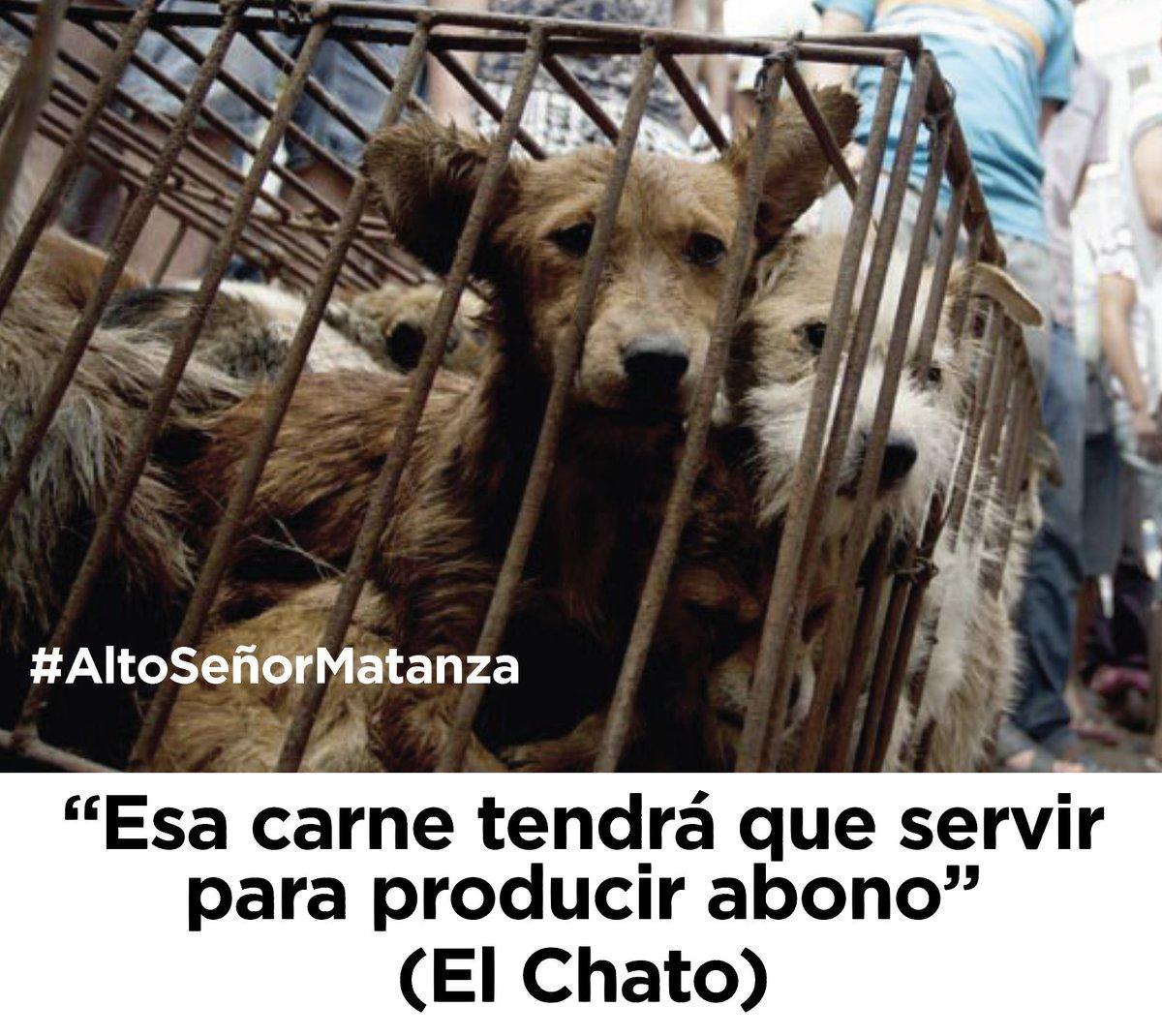 No a la institucionalización de la matanza en Loja. Aplique Política Pública de Bienestar Animal. #AltoSeñorMatanza https://t.co/DbD06nbacD