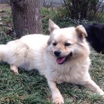 @kss_yoko #拡散希望 #埼玉県この犬を探しています坂戸市、川越市、鶴ケ島市のどこかだと思いますご近所で見かけたことはありませんか? 何か情報がありましたらどんなことでもいいので教えてくださいお願いします #迷子犬 https://t.co/8D78gxZIIk