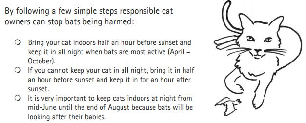 56% of bats do not survive a cat attack and 30% cannot be returned to the wild. If you have a cat read bellow https://t.co/d2DoUebuon