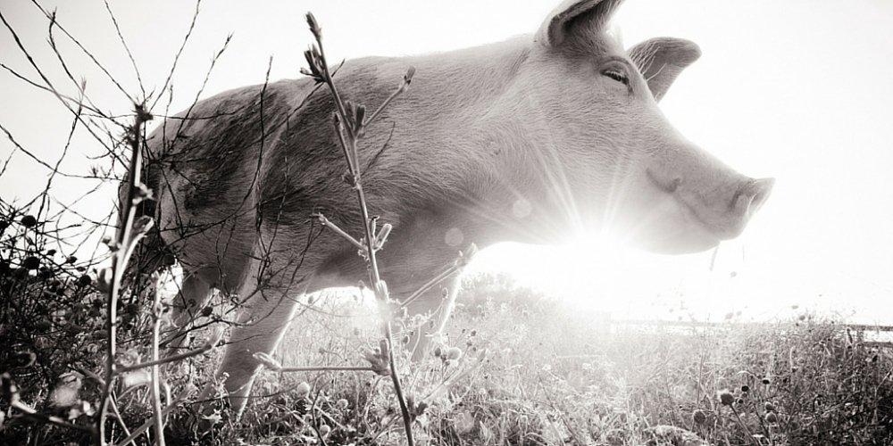 Nothing tastes as good as saving lives feels. #vegan https://t.co/Eiyr8E2QLi