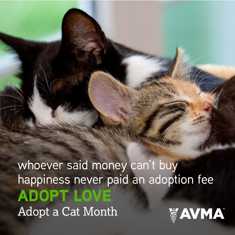 Whoever said money can't buy happiness never paid an adoption fee. Adopt love. #AdoptACatMonth https://t.co/sWnZbRfxvI