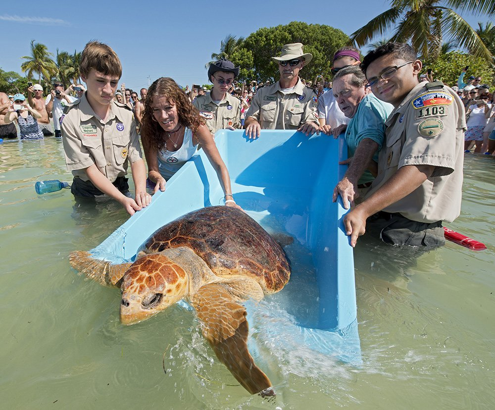 "Treated at the Florida Keys Turtle Hospital, ""Bubbles"" was released Saturday back to the wild. https://t.co/vCZRwyN1hB"