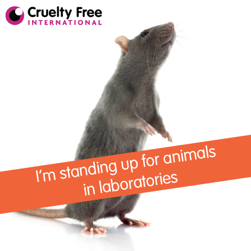 We are standing up for animals in laboratories. Please retweet if you are too. https://t.co/U4Y7Bhuofj