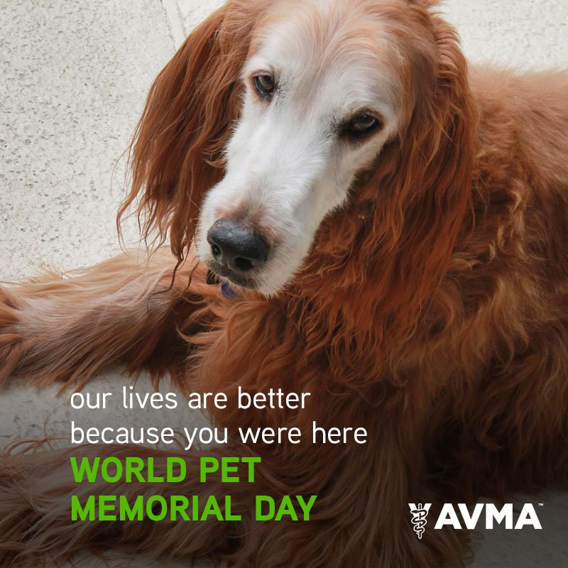 Those we loved are never truly gone....they always remain in our hearts and memories. #PetMemorialDay https://t.co/js1kvki7f2