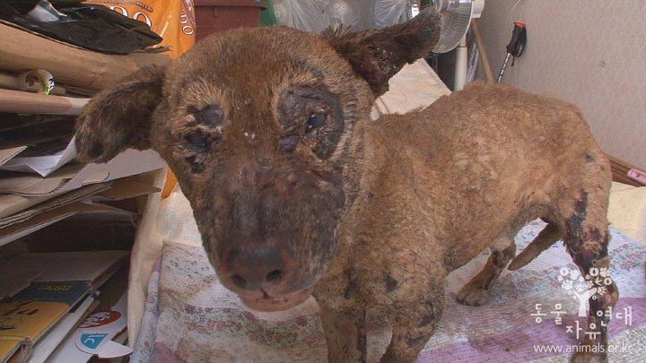 기름을 뿌려 불을 붙인 것으로 추정되는 강아지를 발견해 범인을 추적하고 있습니다. 동물자유연대는 결정적 제보자에게 사례금 200만원을 지급합니다. 051.714.6227, sis@animals.or.kr https://t.co/u3fn43M0lR