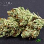 https://t.co/mqQYdT5DkQ Featured #MMJ Strain of the Day: #AsteroidOG An #Indica dominant hybrid. #lasvegas https://t.co/SpB79PVhPH