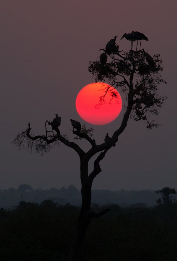 Sunset over an Acacia tree in the Kenyan serengeti | Photography by ©Pamela Wayne-Carter https://t.co/indrF5litC