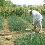 #EconomiaPA Control de Precios golpea la producción de cebolla. https://t.co/fhEjqutXgK https://t.co/36Ctl9YrKa