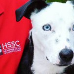 Meet this beautiful blue-eyed pup named Echo on #UpForAdoption tonight at 10PM on @SNNTV ???????????????? #SRQ #pet #adoptdonts… https://t.co/5pWUMpB9fE