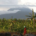 #InteresantePA Tierra volcánica beneficia cultivo en Congo, pero hay riesgo https://t.co/F3H6dYzJG5 https://t.co/YN76ucTOGc