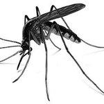 Los 3 años de mentiras Varela pasan; El mosquito se queda. ! ELIMINA LOS CRIADEROS ¡ https://t.co/P3U4mT3uM1