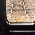 さっき起きた出来事。おじいさんが線路にジャガイモを置いて逃げて電車が止まった。運転しが拾って線路外に…