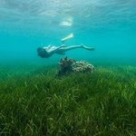 Green Island living up to its name. Swimming in the beds of sea grass with @caitensphoto #exploreTNQ https://t.co/dNAsfnjb1z