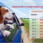 Este verano no dejes a tu #mascota en el interior del coche. Puede provocarle la muerte. We ❤ #Animals #091 https://t.co/fldvHUSoSM