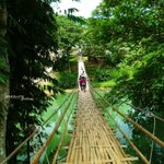 Bamboo hanging bridge in Sevilla, Bohol, Philippines. Travel Philippines!… – Cebu Picture https://t.co/URTt1iSBDb https://t.co/e6DsIgQeV3