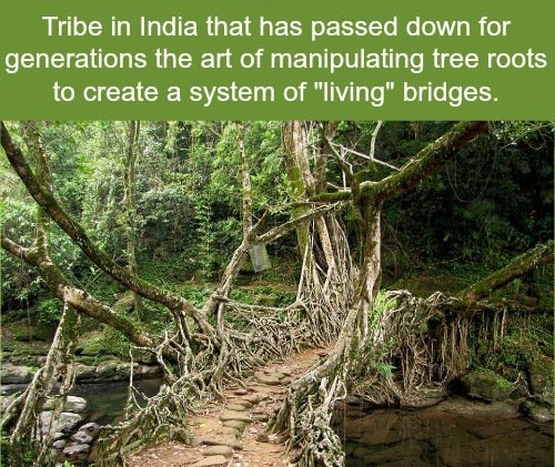 The Root Bridges of Cherrapunji, India: https://t.co/DY4FlJ917m