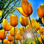@Kralice_Hanimim ✨Günaydın Canlarım.Güneşin ışığı gibi pırıl pırıl ve sıcacık sevgi dolu bir gün ve hafta olsun????????✨ https://t.co/25ayO3DjKA