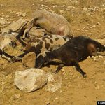 Violation of intl treaties, israel cutting water to Palestinians caused deaths of livestock https://t.co/Swj8WLq53F https://t.co/hK7x6Tz0jy