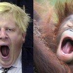 イギリス人が「ボリス・ジョンソンの画像をアップすると近い構図のオランウータンの画像が送られてくる」的な大喜利で遊び始めた。 https://t.co/wxqdfRv9Ge