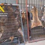 Si compras pieles de animales en peligro de extinción colaboras para que sigan siendo presa de los furtivos https://t.co/JOdJT8Ixz0