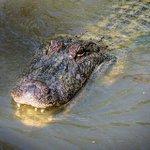 Crews responding to alligator sighting at Sullivans Island https://t.co/Wa1t9PnBIR #chsnews https://t.co/bcWSD1pAGq