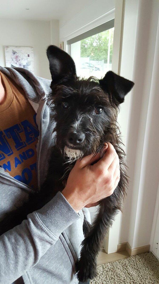 URGENTE Buscamos una familia para este perro, lo encontramos abandonado en la carretera. RT por favor!!! https://t.co/yuzQyjoKxm