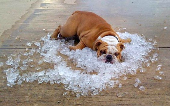 Hot dog! Please look out 4 UR pets & vulnerable neighbours when the weather gets hot. #AllTogetherNow https://t.co/VUTbZmMiEg