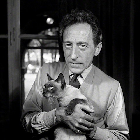 """""""I love cats because I enjoy my home; and little by little, they become its visible soul."""" – Jean Cocteau https://t.co/vUT2T389Cn"""