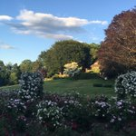 A glorious garden on a glorious evening   Last night at home of Barbara and john schumacher https://t.co/UvplVHvFIR