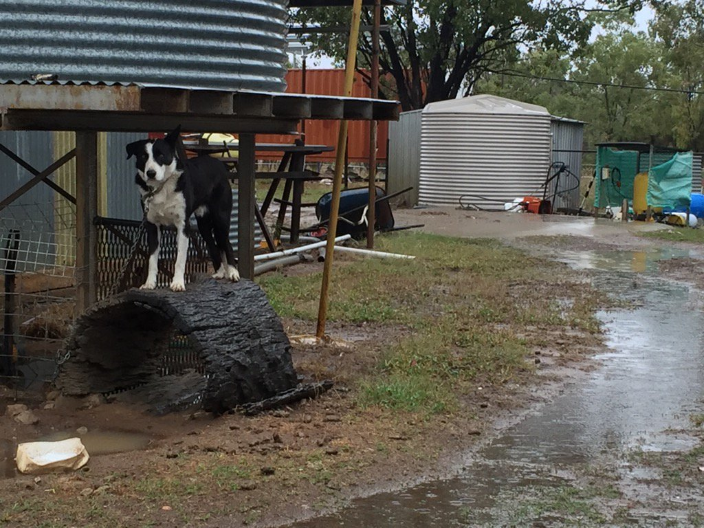 It's wet out Roma way @abclandline @BruceScottMP https://t.co/gpwccovkis