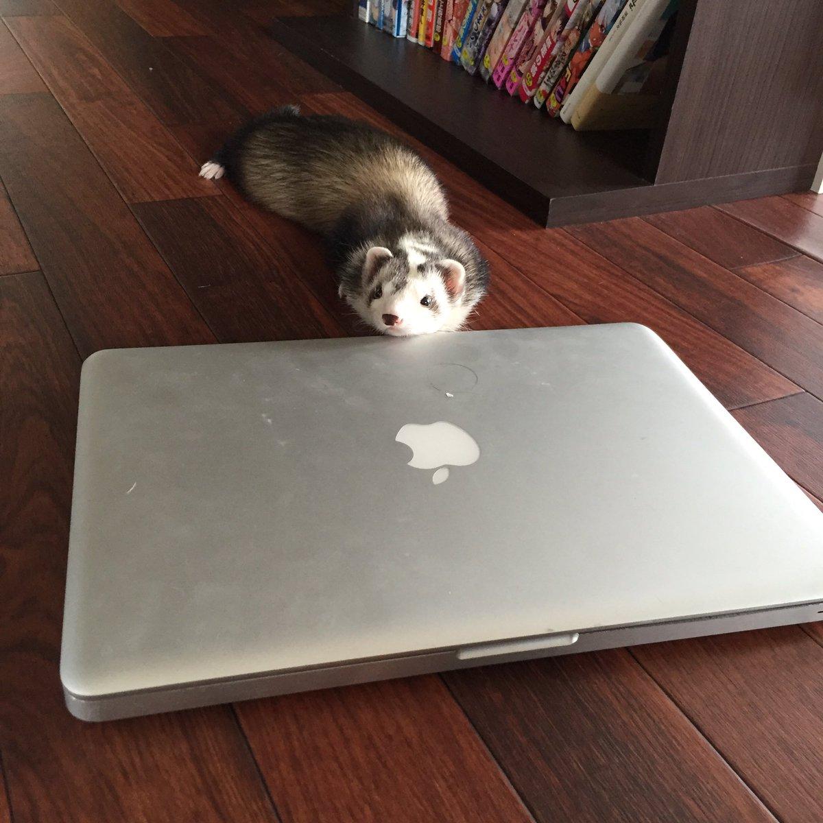 壊れたMacBook Pro、フェレット用の冷んやりマットと化した https://t.co/m2CbFUeINO