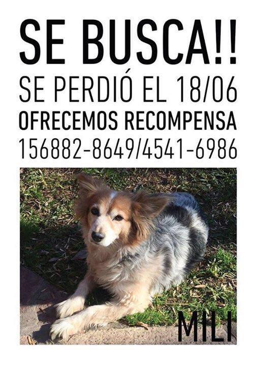 Por favor ayudenme a encontrarla. Su dueño se fue al cielo y se la dejo a su hermana. Ayudenme!! https://t.co/B7ZMWgHArg