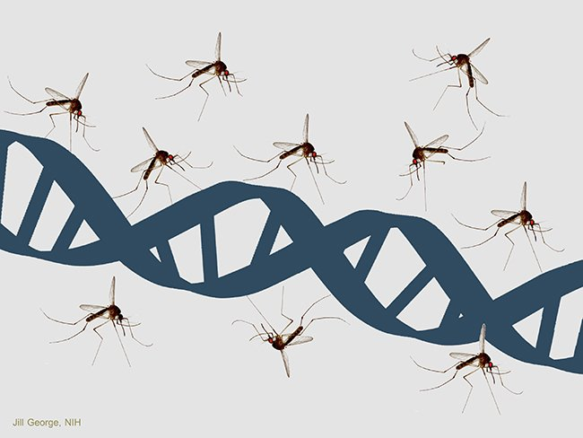 #CRISPR screen identifies potential drug target for mosquito-borne #virus:  https://t.co/aZ5p7Kjtmi https://t.co/YluYUdKuGL