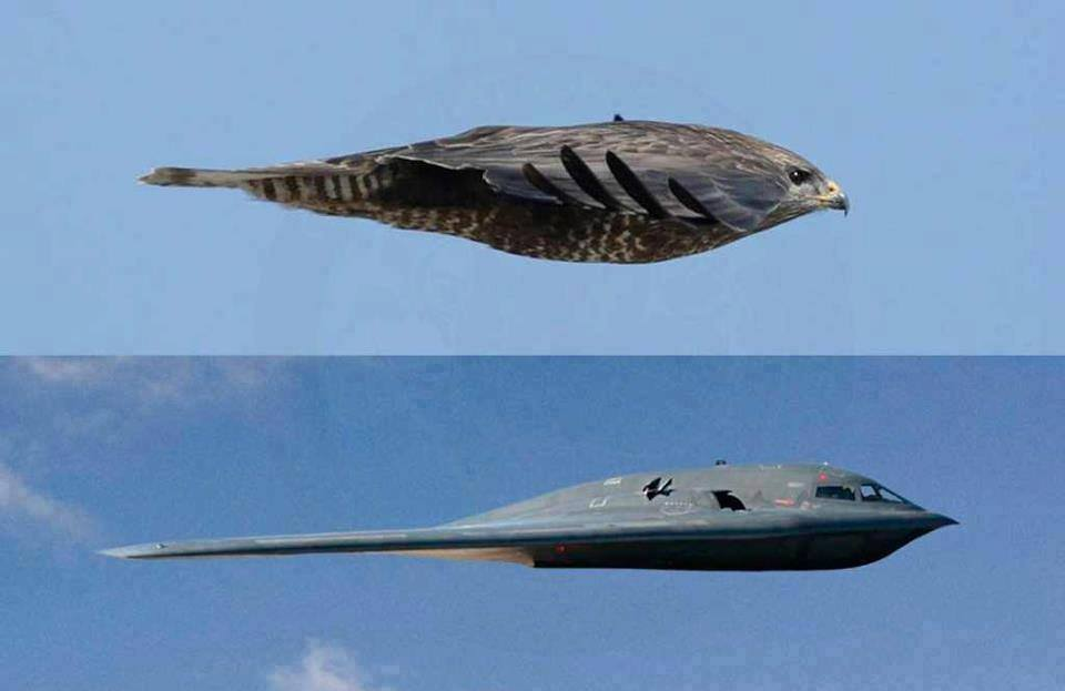 An unbelievable image proves the shape of the B-2 stealth bomber was suggested by Mother Nature: https://t.co/s2pVowdGXo