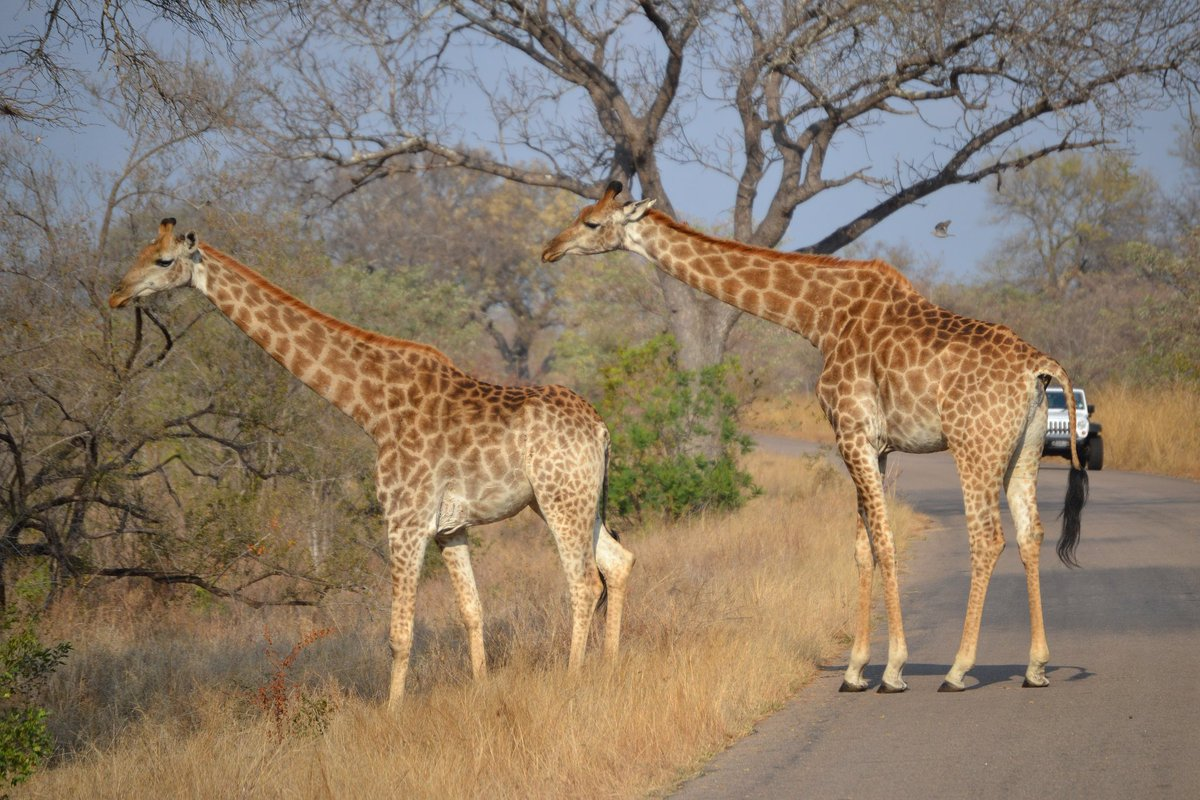 Plan your perfect safari with these tips from @huffingtonpost »