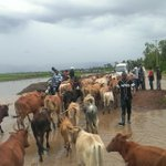 Cattle thief killed at Nandi-Kisumu county border, residents demand adequate security