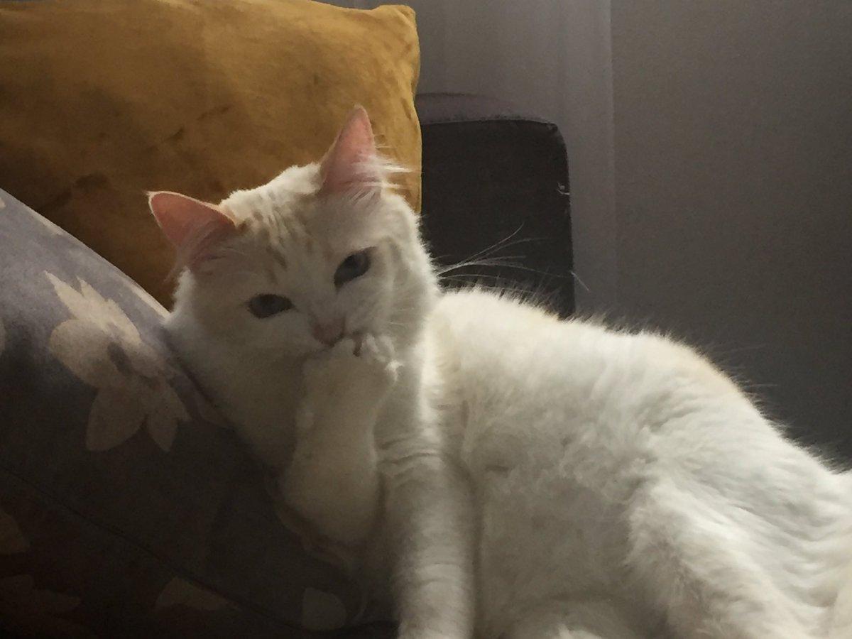 meu gato planejando fazer o mal https://t.co/xcqBLZXvqZ