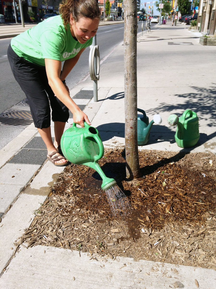 Please give trees a drink today! Three buckets of life-saving water will make all the difference for a street tree! https://t.co/ecMyBH1Y77