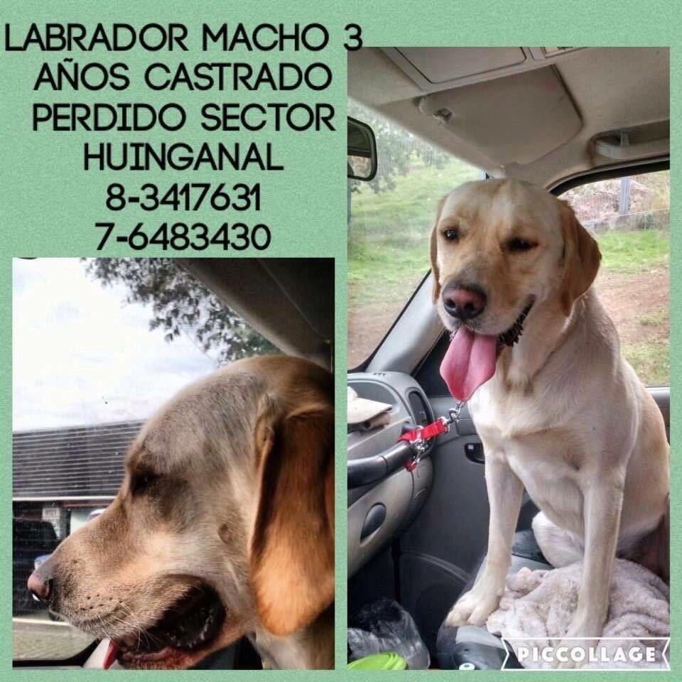 Por favor, ayúdeme a encontrar a Polo @bartorell @botaspuesta @carolinapinoc @DanielVitis https://t.co/sXLZQgZbkO