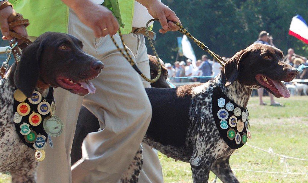1 мая в николаеве в парке победы прошла выставка охотничьих собак