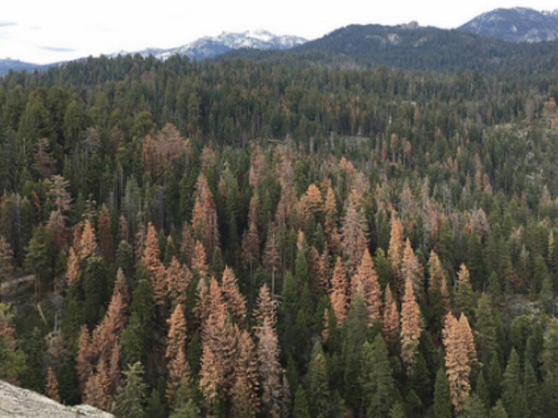 At least 66 million dead trees in Sierra Nevada says @forestservice - 66 million! https://t.co/ET7OMoG97J #CAdrought https://t.co/2Rx2XBumUd