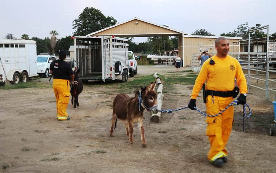 San Diego County has rescued 29 miniature donkeys, 22 dogs and an emu from the #Borderfire: https://t.co/2ERyRLwNUO https://t.co/ld4ZqCGbpK
