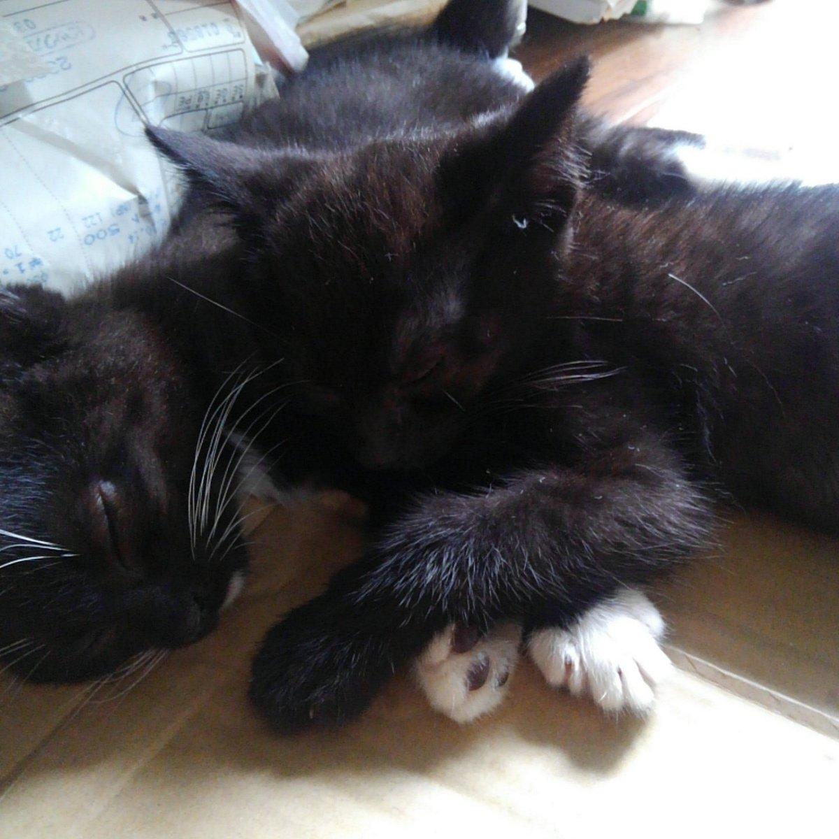 自宅ベランダに母猫が子猫を連れてきましたペット不可のマンションで こっそり保護してますが  どなたか里親になっていただけないでしょうか よろしくお願いします 引渡し等応相談 #子猫 #里親募集 #拡散希望 #板橋 https://t.co/qCuMkNlz0C