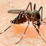 Antibodies found which 'neutralise' Zika virus: study