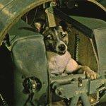 """A cachorrinha Laika prestes a decolar para o espaço. Na ocasião, declarou: """"mas vcs são bem filha da puta mesmo"""". https://t.co/Nj2KqIlHA8"""
