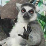 Cuando viene un pariente a los gritos con un choclo de plástico en la mano a pedirte que te unas al trencito. https://t.co/9n1T6u9RxA