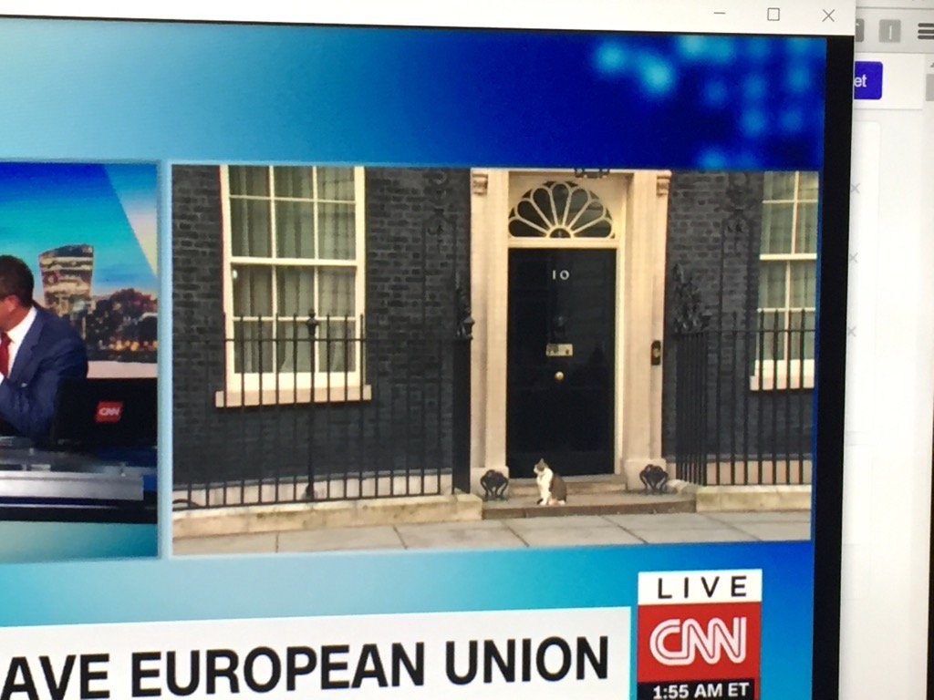 Cat at 10 Downing Street expected to speak to #Brexit - appears speechless like many of us https://t.co/3CnohdsHmm