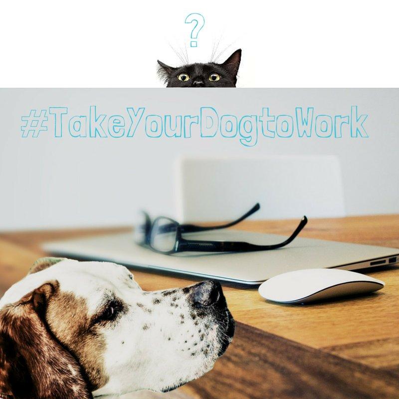 RT @LCSNC: Take your Dog to Work Day #TakeYourDogtoWorkDay https://t.co/tiyxqiNozG